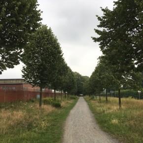 Radschnellweg Belm Juli 2017 (3)